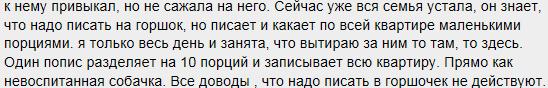 gorshok1