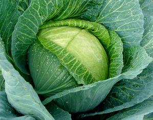 Со скольки месяцев можно давать капусту