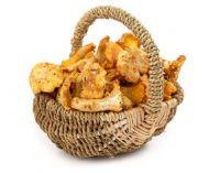 грибы в корзинке