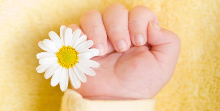 рука ребенка с ромашкой