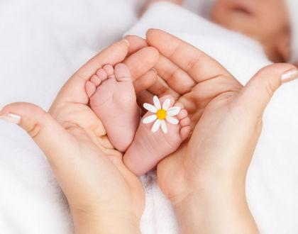 ножки младенца в маминых руках с ромашкой