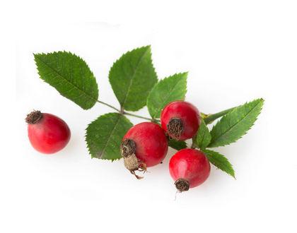 шиповник плоды с листочками